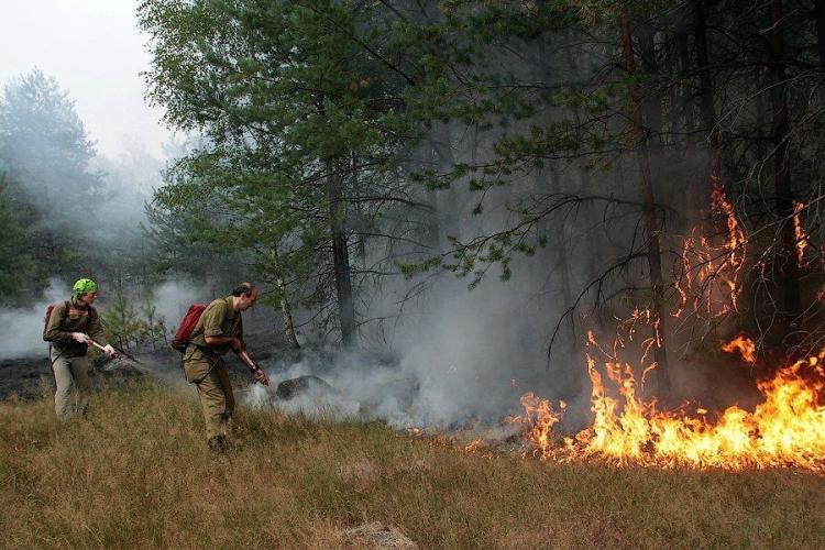 Защитим от пожара дома из CLT-панелей